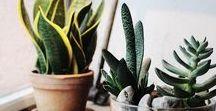 bitkiler | indoor garden