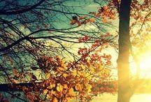Moments / Instants captifs et capturés au fil des saisons ...  Captives and captured moments with the seasons...