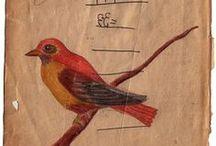 rare bird / by Barb Jordan