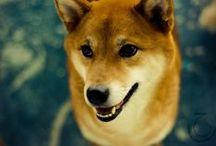 Dogs / Best friends