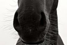 Horses / Amazing horse photography | I've had a lifelong love of these beautiful, gentle, soulful creatures.  A rider since the age of seven, today my passion extends to rescue -- My wife and I adopt former race horses and give them a happy, carefree life on our farm.  -- Jeff Kahn, Kinetic Sculpture artist