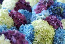 Fabulous flowers...