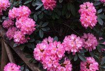 Great Gardens / Himalayan Garden, Ripon