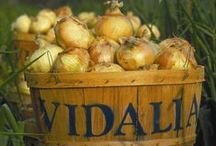 Vidalia Onions... The Sweetest! / Vidalia Onions are America's Favorite Sweet Onion, the standard by which all sweet onions are measured.  We're proud of our Vidalia Onions here in Georgia, and we want to share our favorite recipes for using them. / by Georgia Farm Bureau