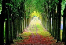 pathways / by Jacinta considine