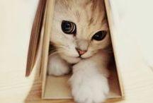 FuN_n_CutE
