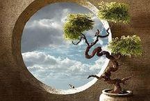 盆栽 (bonsaï)
