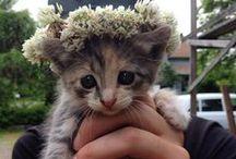 > FUR BABIES < / kittens ! cuteness overload