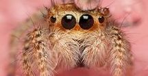 Amazing Arachnids / Arachnids - that means mostly spiders in the context of Pinterest pictures. I myself love spiders but I am aware that people often fear them.