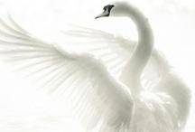 ~ﻬ Pure White ﻬ~ / which is described as a symbol of purity of the color:WHİTE.. You can pin all of your white things here. Please pin :) enjoy..