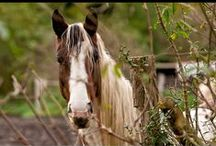 Horses ......Spirited Like Me!! / my #1 animal! / by Sensuality Soul