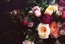 F L O R E S / Flowers