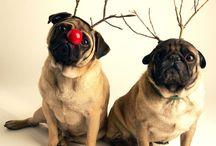 Dogs / Puglovers