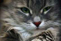 CATS ♥ / Lovely, beautiful and cute cats