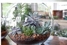 Plants n Things