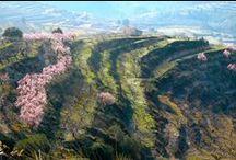 La vall de Gallinera / Vall de Gallinera es un municipio de la Comunidad Valenciana, España. Situado en el noreste de la provincia de Alicante, en la comarca de la Marina Alta. http://www.pegonatura.es/