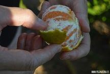 Naranjas y mandarinas Pego Natura / Naranjas y mandarinas Pego Natura