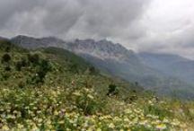 Coll de rates, Vall de Tàrbena (Alacant) / Coll de rates, Vall de Tàrbena (Alacant)