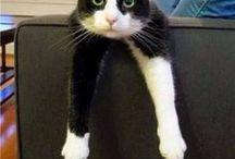 Cat - typical cat / Kat - tipies kat / Cat - typical cat / Kat - tipies kat