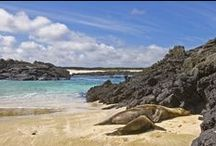 Galapagos Islands Tours / Stunning images taken from our travel collection in the Galapagos Islands.