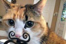 OK, so I am a cat lady!