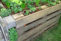 Gardening and landscape ideas / Gardening and permaculture
