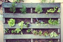 The Gardening Board