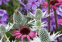 Garden World / Beautiful inspirational gardens / by Judith Campbell