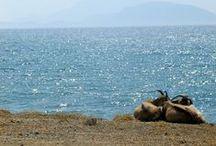R H O D E S / Voyage sur l'île de Rhodes . Travels