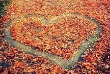 F A L L / Photographies autour de l'automne