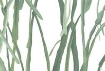Vleijt - serie Flora