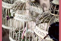 Vogelkooitjes - giftbox