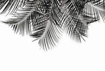 Black Sandalwood Inspiration / Bewitching blackberry. Luscious black fruit, geranium and wild lavender balance woody notes of fresh oak moss and earthy sandalwood. Mesmerizing yet grounded.