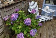 Garden-Ideas / tuin tuinieren garden