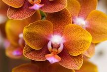 Orchids / by Margarit Petrosyan