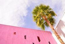 Hide + Seek | Palm Springs Paradise / Hide + Seek | playful children eyewear 100% UV Protection + Polarized One Year Guarantee hideplayseek.com