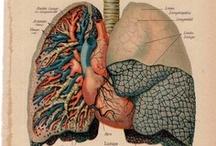 órgão.