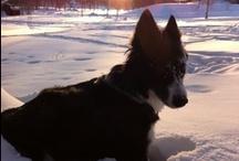 Dogs / My photos of doggies