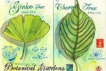 Sketching botanica
