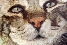 Cat Faces 1 / ART