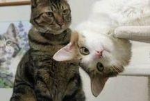 Cat Photos 1