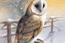 Owls in Winter / ART