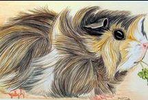 Guinea Pig & Hamster