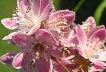 VIRÁGOK / Virágaim a kertből .