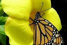 flores / armonía sencillez-colores luz