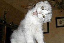 Cat Humor 3