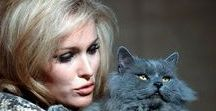 Famous People and Cats 2