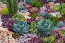 Garden-Flowers-Landscape