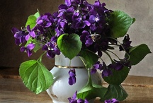 """The Virtues of Violets / """"We are violets blue, For our sweetness found Careless in the mossy shades, Looking on the ground. Loves dropp'd eyelids and a kiss,--such our breath and blueness is."""" ~ Lee Hunt (James Henry Leigh Hunt) Source: Songs and Chorus of the Flowers- Violets / by Deborah G."""