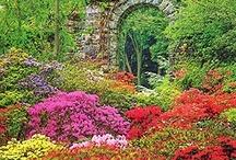Gorgeous Global Gardens / by Deborah G.